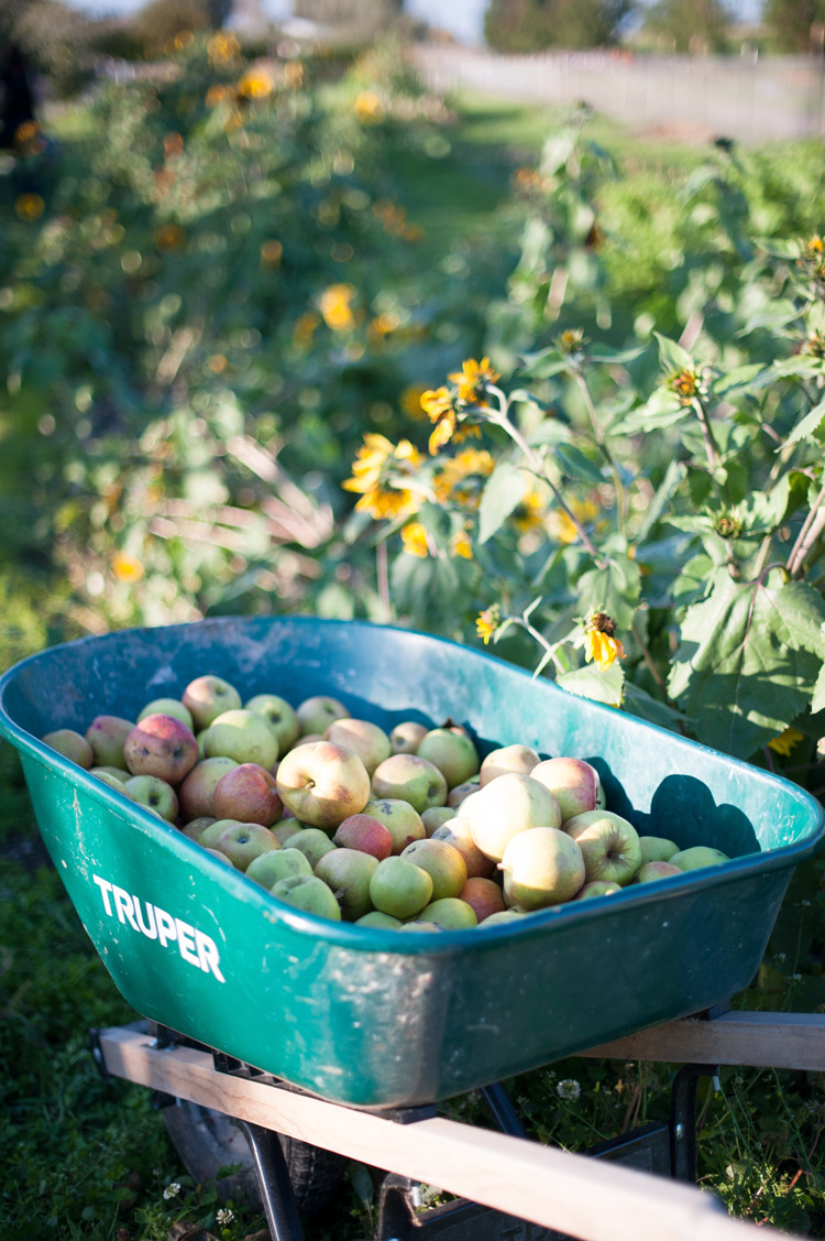 apple-picking-fall2013-blog-17