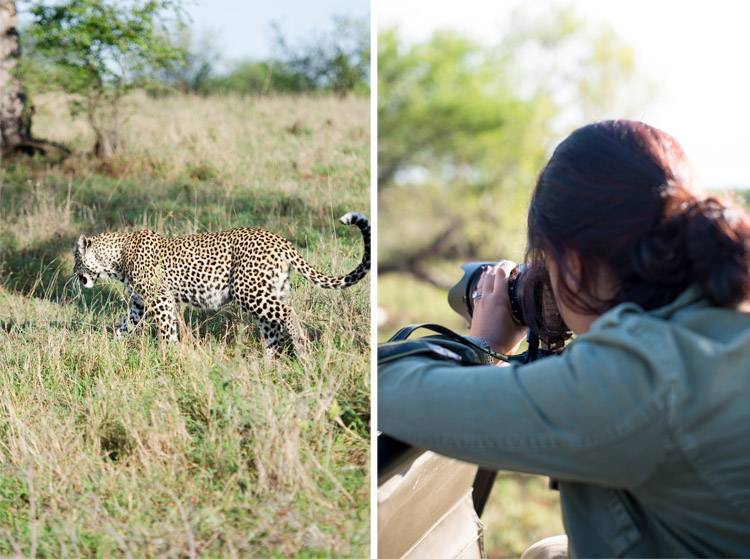 londolozi-blog-collage10