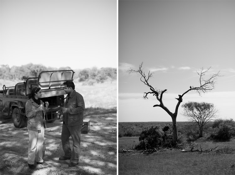 londolozi-blog-collage11