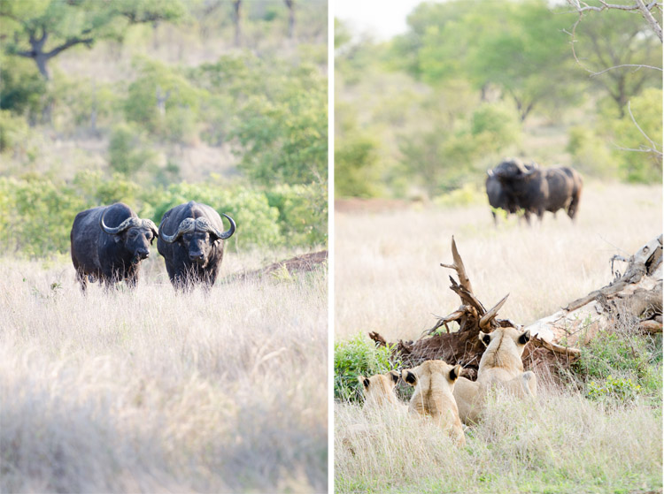 londolozi-blog-collage19