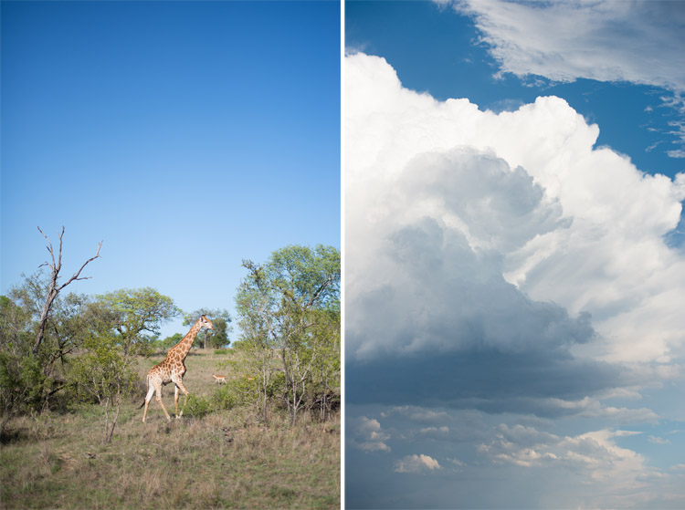 londolozi-blog-collage28