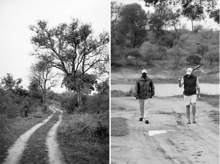 londolozi-blog-collage34